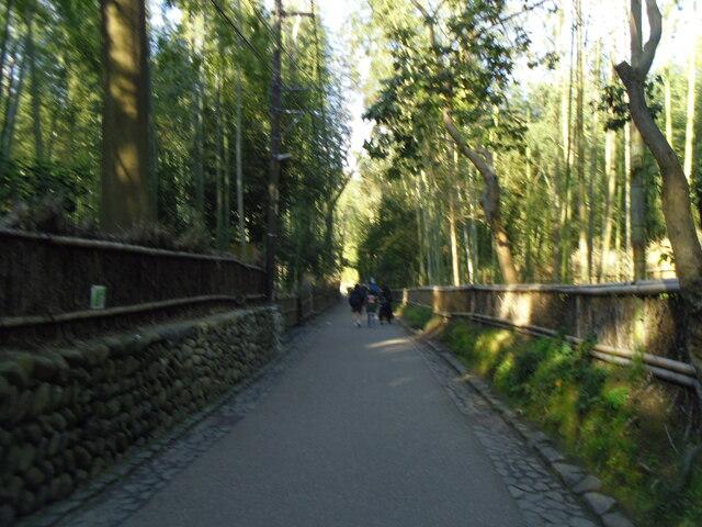 野宮神社 竹林の小径