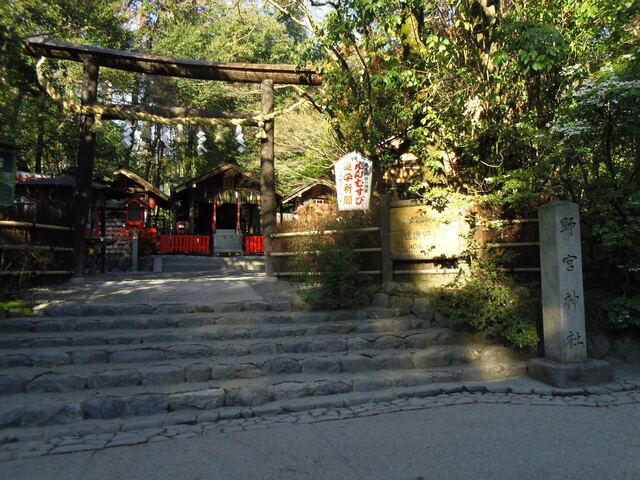 野宮神社 黒木鳥居