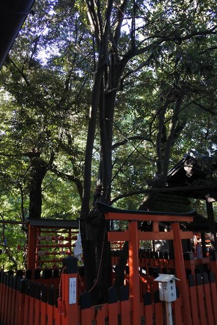 相生社(下鴨神社の末社) 縁結び神社